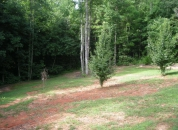 Backyard Lawncare Atlanta
