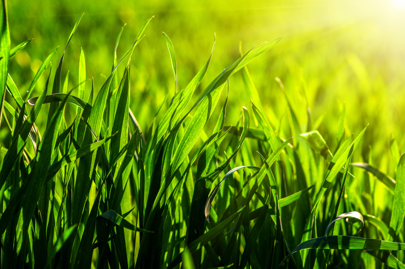 Best Grass Options For Atlanta Ga And Other Southern